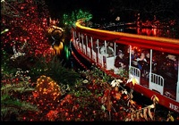 Bright nights en Stanley Park